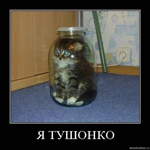 котят  про очень смешные картинки