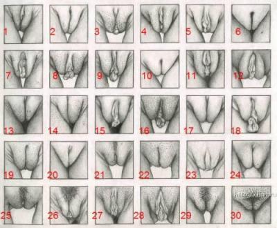 Вид женских писек фото 658-629