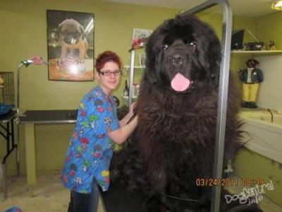 Самые большие собаки на земле
