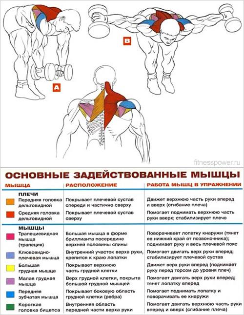Питание для рельефа мышц в домашних условиях