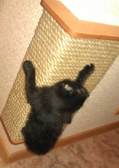 Как сделать когтеточку коту своими руками