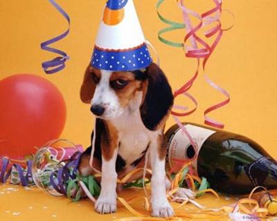 Поздравления с Днем рождения любителям собак