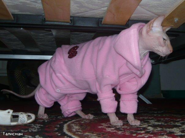 Вязанная одежда для сфинксов